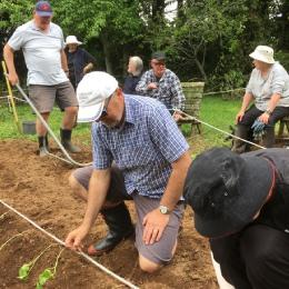 Kumera planting in Taranaki